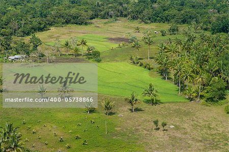 small rice field on Bohol, Philippines Stock Photo - Budget Royalty-Free, Image code: 400-05738866