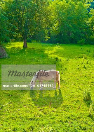 Horse Grazing on  Meadows on the Slopes of The Alps