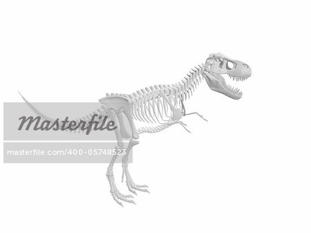 white tyrannosaurus Dinosaur skeleton isolated on white background