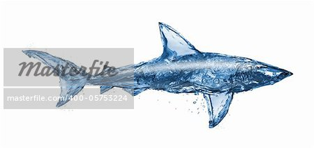 Water shark, isolated on white background