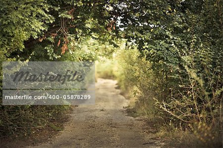 green alley with rural footpath Stock Photo - Budget Royalty-Free, Image code: 400-05878289