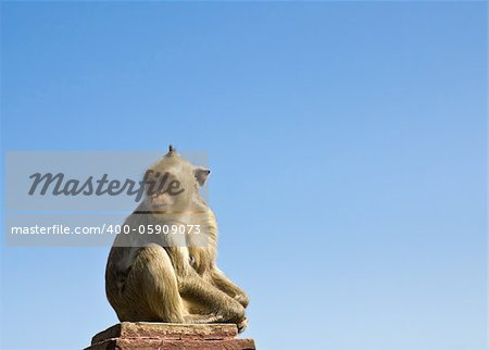 Macaque monkey sat on stone and blue sky in Thailand Stock Photo - Budget Royalty-Free, Image code: 400-05909073