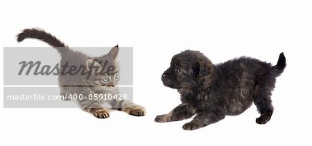 Puppy and kitten playing isolated on white background Stock Photo - Budget Royalty-Free, Image code: 400-05910428