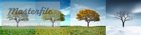 An image of a nice tree in four seasons Stock Photo - Budget Royalty-Free, Image code: 400-05936386