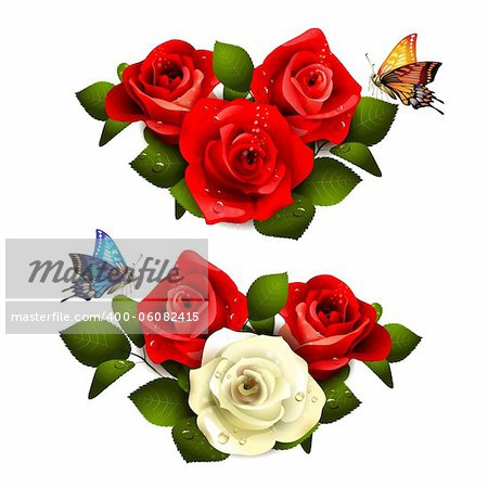 Roses with butterflies on white background Stock Photo - Budget Royalty-Free, Image code: 400-06082415
