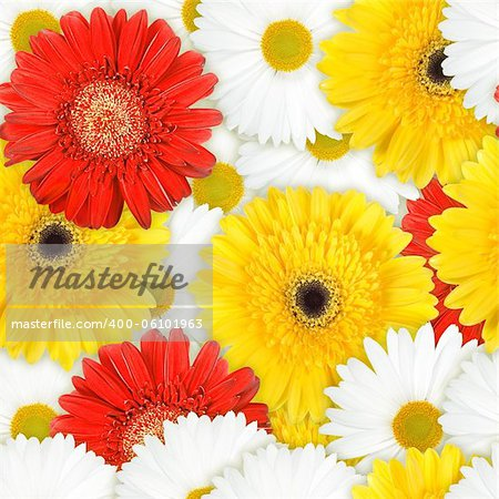 Abstract background of red, yellow and white flowers. Seamless pattern for your design. Close-up. Studio photography. Stock Photo - Budget Royalty-Free, Image code: 400-06101963