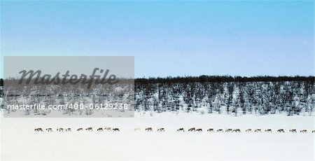 Reindeer row Stock Photo - Budget Royalty-Free, Image code: 400-06129238