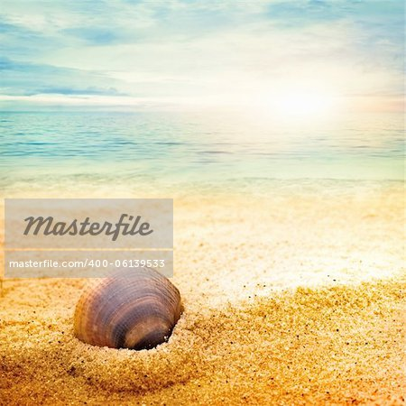 Sea shell background  on fine goden sand with copyspace