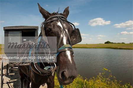 An Amish horse and buggy traveling a gravel road pass by a pond and open field on a sunny day Stock Photo - Budget Royalty-Free, Image code: 400-06141588