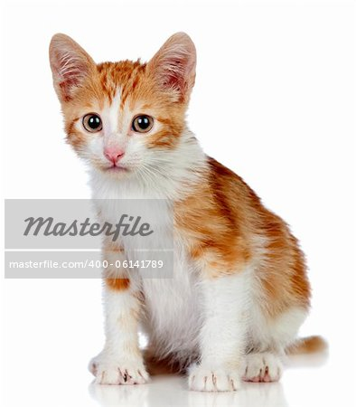 Adorable little cat isolated on white background. Stock Photo - Budget Royalty-Free, Image code: 400-06141789