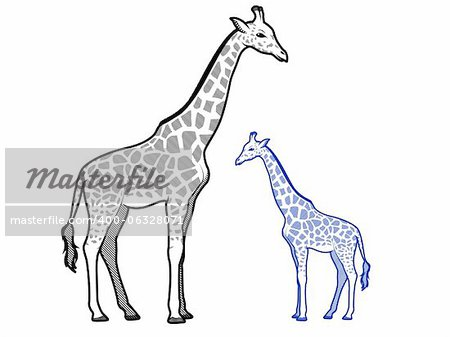 Giraffe Line Art Illustrations Stock Photo - Budget Royalty-Free, Image code: 400-06328071