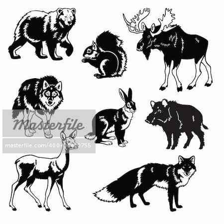 vector set of most popular forest animals,Eurasia beasts,black and white images isolated on white background Stock Photo - Budget Royalty-Free, Image code: 400-06410755