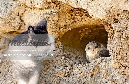 Cat hunts on a bird sitting in a nest
