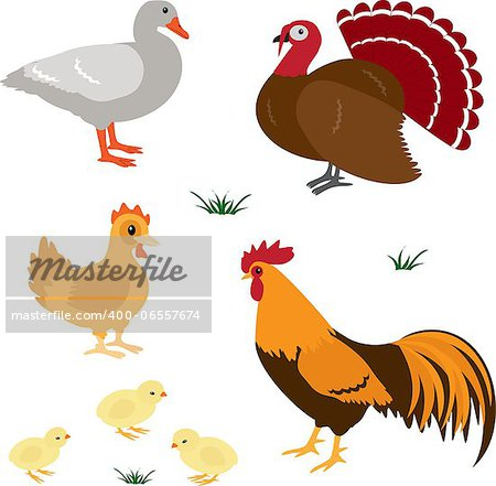 Farm birds vector set isolated on white Stock Photo - Budget Royalty-Free, Image code: 400-06557674