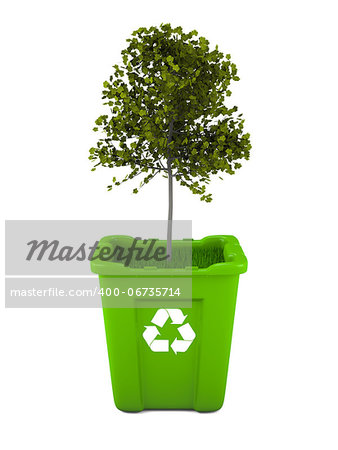 Paper recycling concept with Italian Maple tree growing from green recycle bin Stock Photo - Budget Royalty-Free, Image code: 400-06735714