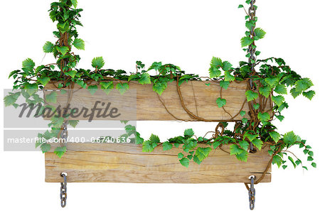wooden sign hanging on the chains and overgrown with ivy. isolated on white. Stock Photo - Budget Royalty-Free, Image code: 400-06740636