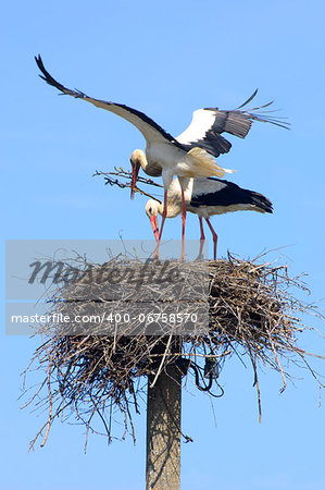 Couple of white storks building the nest Stock Photo - Budget Royalty-Free, Image code: 400-06758570