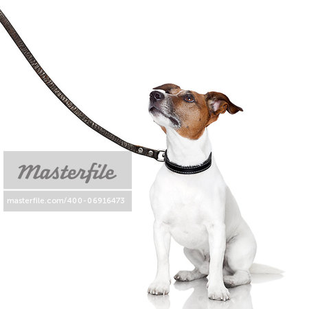 bad behavior dog being punished by owner Stock Photo - Budget Royalty-Free, Image code: 400-06916473