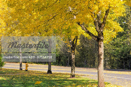 Yellow Falling Leaves from Residential Neighborhood Beech Trees Along the Road in Autumn Stock Photo - Budget Royalty-Free, Image code: 400-07114718
