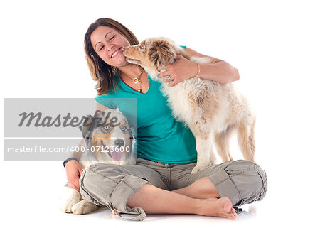 purebred australian shepherds and woman  in front of white background Stock Photo - Budget Royalty-Free, Image code: 400-07123600