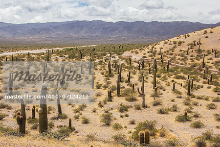 Field of cactusses in  Los Cardones National Park, Argentina. Stock Photo - Budget Royalty-Free, Image code: 400-07124212