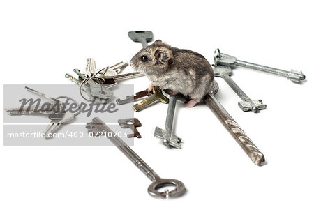 Djungarian Hamster on the old keys Stock Photo - Budget Royalty-Free, Image code: 400-07210703