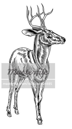 A vintage style woodcut deer illustration of a buck or stag proudly standing and looking into the distance Stock Photo - Budget Royalty-Free, Image code: 400-07214485