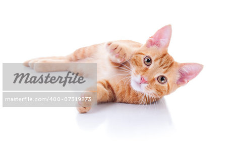 Playing kitten waving at camera. Motion blur on waving cat paw. On white background. Stock Photo - Budget Royalty-Free, Image code: 400-07319273