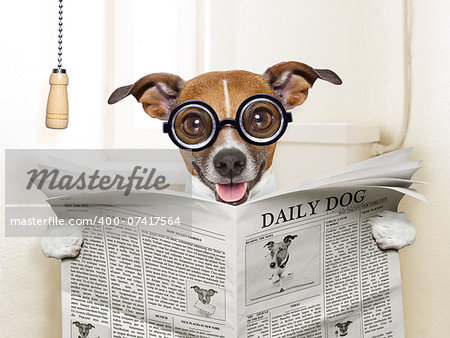 crazy silly dog sitting on toilet and reading magazine Stock Photo - Budget Royalty-Free, Image code: 400-07417564