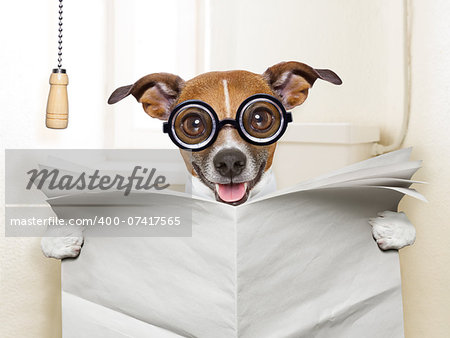 crazy silly dog sitting on toilet and reading magazine Stock Photo - Budget Royalty-Free, Image code: 400-07417565