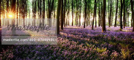Long shadows in bluebell woods at sunrise Stock Photo - Budget Royalty-Free, Image code: 400-07445935