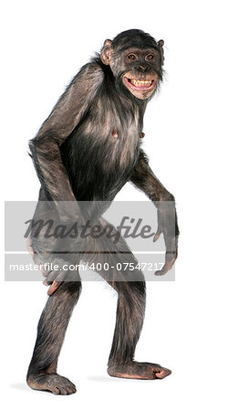 Mixed-Breed between Chimpanzee and Bonobo (8 years old) Stock Photo - Budget Royalty-Free, Image code: 400-07547217