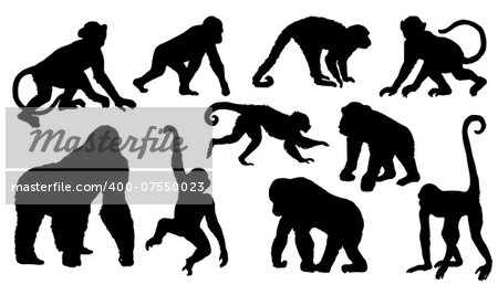 monkey silhouettes on the white background Stock Photo - Budget Royalty-Free, Image code: 400-07550023