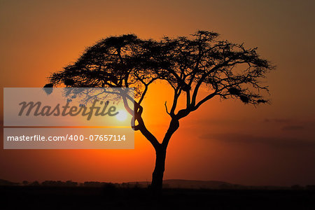 Sunset with silhouetted African Acacia tree, Amboseli National Park, Kenya Stock Photo - Budget Royalty-Free, Image code: 400-07657114