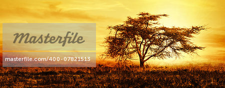 Big African tree silhouette over sunset, single tree on the field, beautiful panoramic image of nature at Africa, summer evening peaceful landscape of Masai Mara Stock Photo - Budget Royalty-Free, Image code: 400-07821513