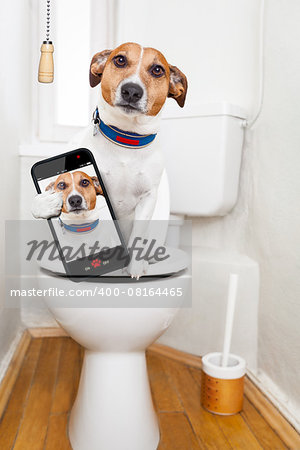 jack russell terrier, sitting on a toilet seat with digestion problems or constipation looking very sad, taking a selfie Stock Photo - Budget Royalty-Free, Image code: 400-08164465