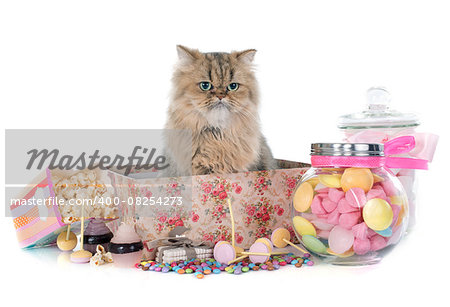 persian cat in front of white background Stock Photo - Budget Royalty-Free, Image code: 400-08254273
