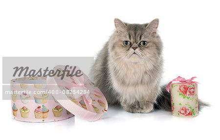 persian cat in front of white background Stock Photo - Budget Royalty-Free, Image code: 400-08254284