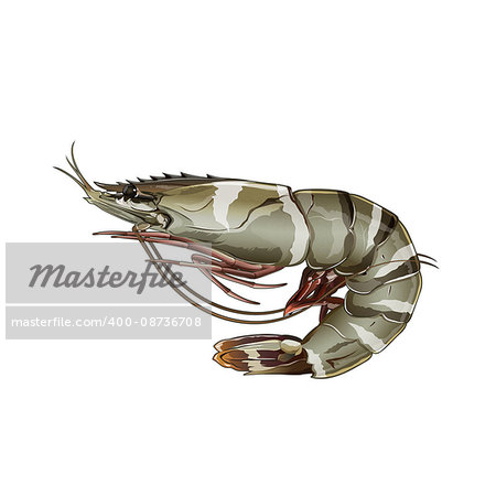 Seafood, isolated raster illustration on white background Stock Photo - Budget Royalty-Free, Image code: 400-08736708