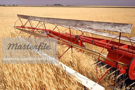 Wheat Harvest, Saskatchewan, Canada