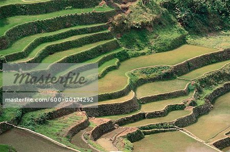 Rice Terraces at Banaue, Province of La Union, Philippines Stock Photo - Premium Royalty-Free, Image code: 600-00174292