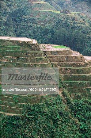 Rice Terraces at Banaue, Province of La Union, Philippines Stock Photo - Premium Royalty-Free, Image code: 600-00174293