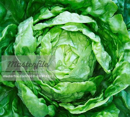 Close-Up of Lettuce Stock Photo - Premium Royalty-Free, Image code: 600-00608272