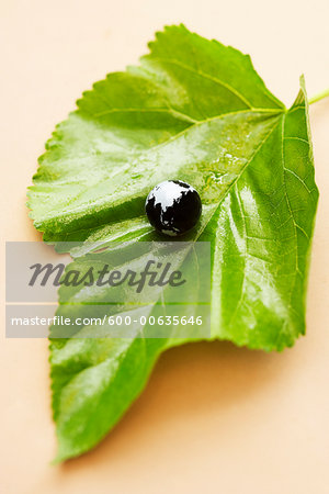 Globe on a Leaf Stock Photo - Premium Royalty-Free, Image code: 600-00635646