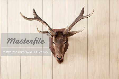 Deer Head on Wall Stock Photo - Premium Royalty-Free, Image code: 600-01124356