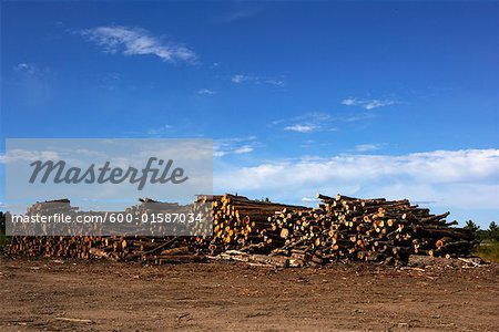 Logs, Ontario, Canada Stock Photo - Premium Royalty-Free, Image code: 600-01587034