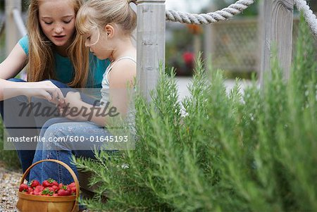 Sisters Picking Strawberries Stock Photo - Premium Royalty-Free, Image code: 600-01645193