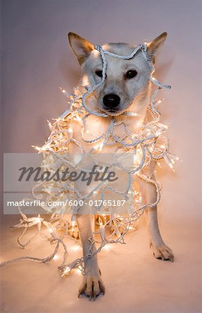 Dog Wrapped in Christmas Lights