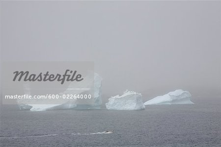 Iceberg in Fog, Near Twillingate, Newfoundland, Canada Stock Photo - Premium Royalty-Free, Image code: 600-02264000