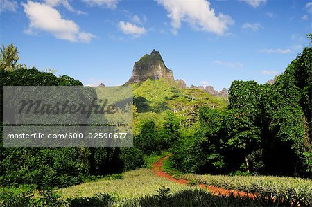 Path to Mount Mauaroa, Moorea, French Polynesia Stock Photo - Premium Royalty-Free, Image code: 600-02590677